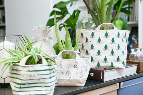 Photo plantes vertes (c) Plantes & moi