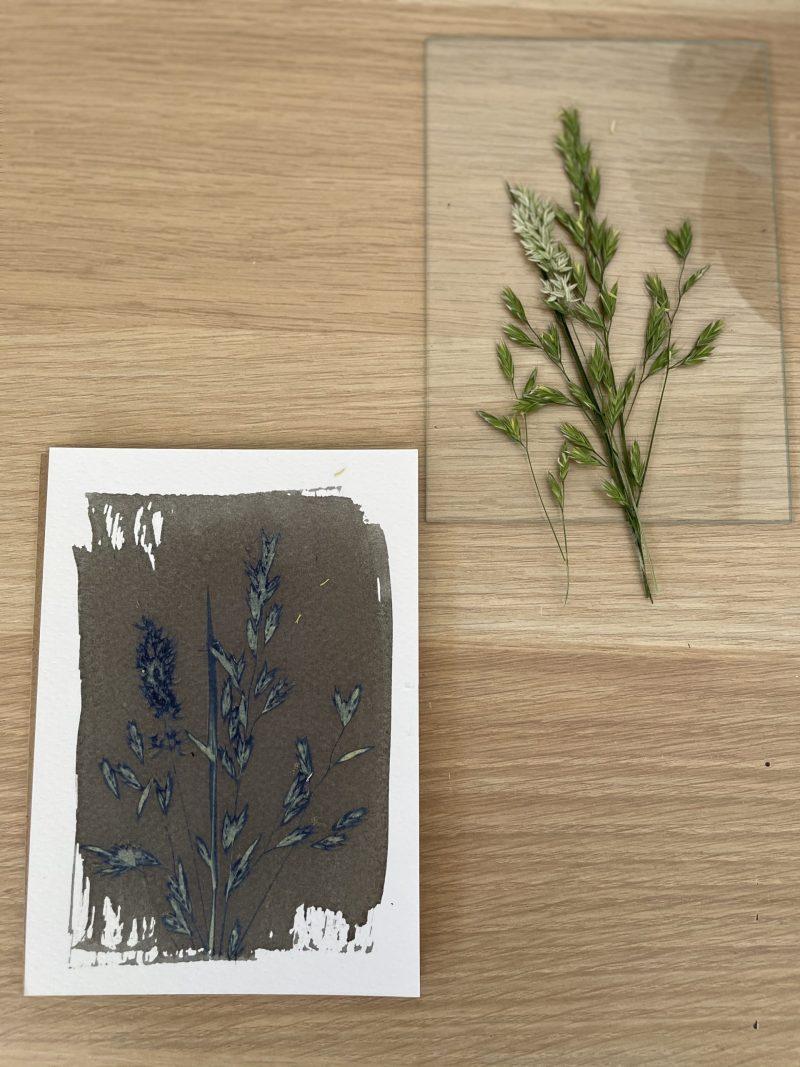 cadre végétaux cyanotype