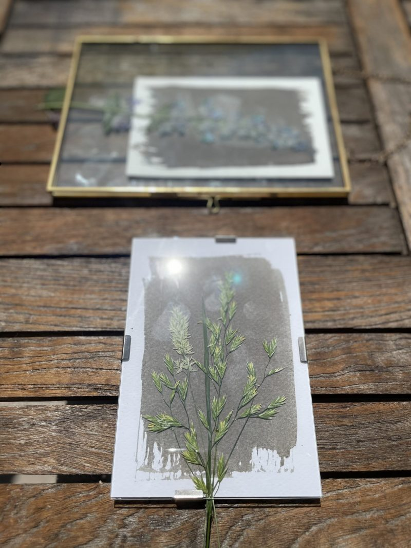 insolation cadre cyanotype