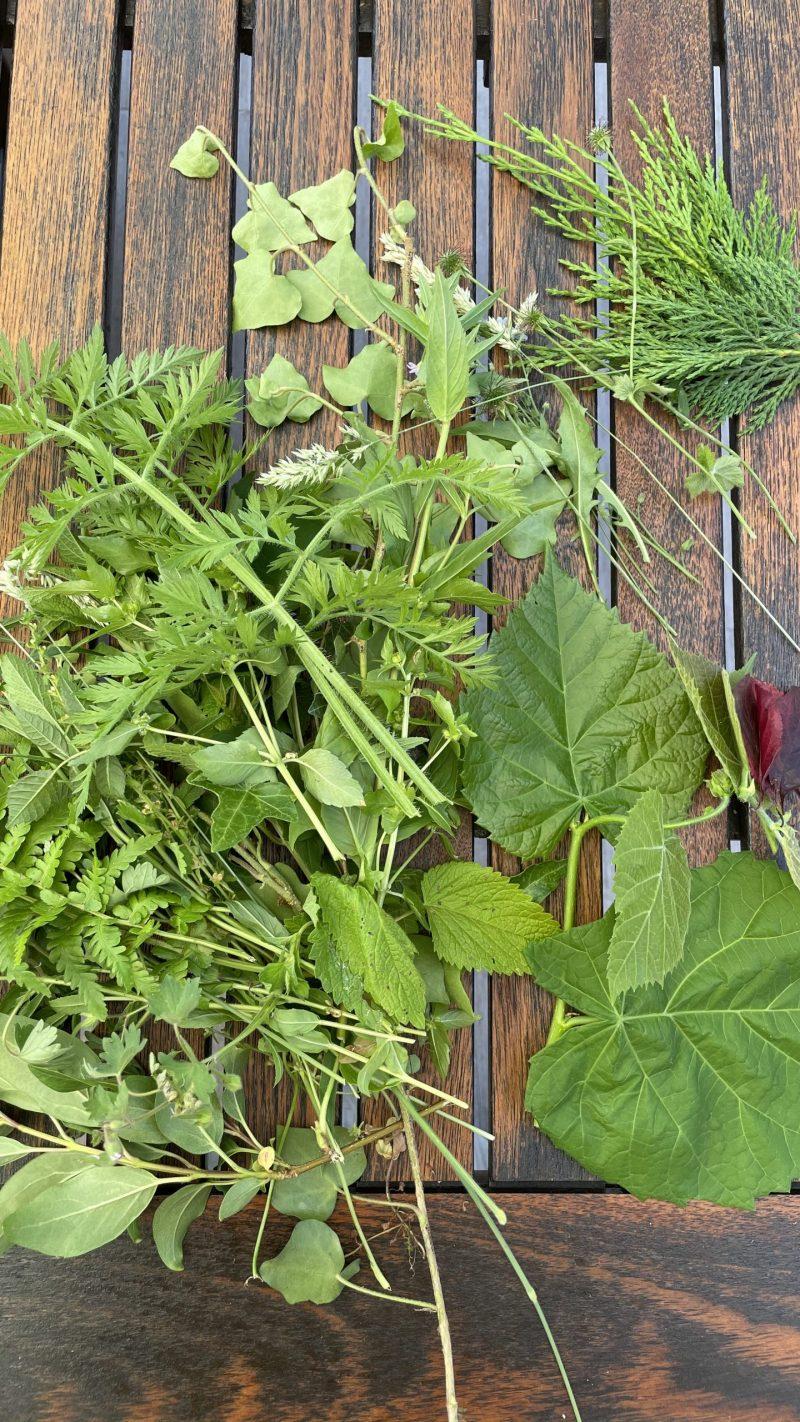 végétaux pour cyanotype